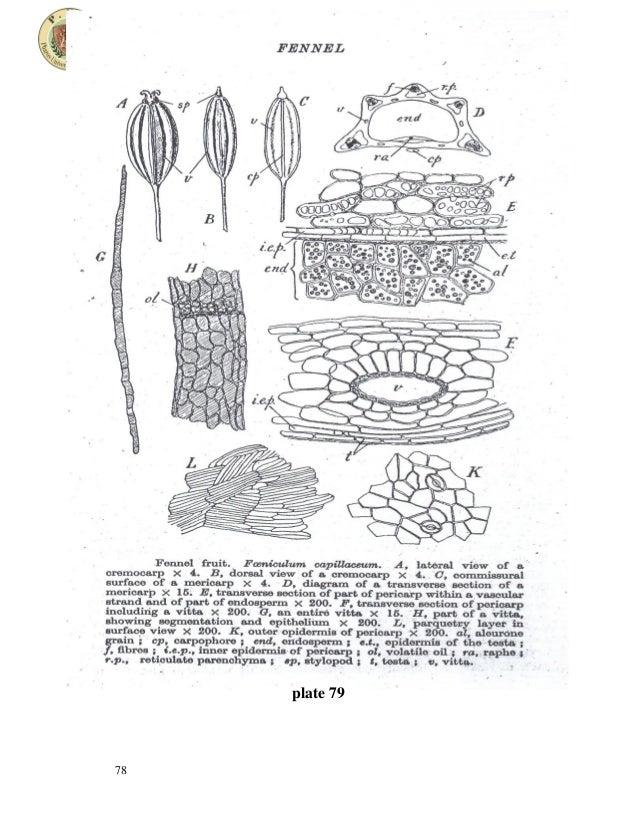 umbelliferous fruits