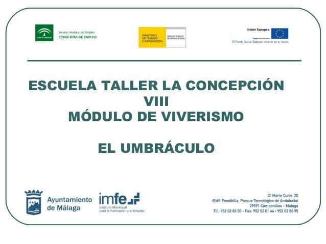 ESCUELA TALLER LA CONCEPCIÓN VIII MÓDULO DE VIVERISMO EL UMBRÁCULO