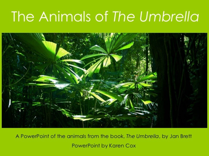 The Animals of  The Umbrella A PowerPoint of the animals from the book,  The Umbrella , by Jan Brett PowerPoint by Karen Cox