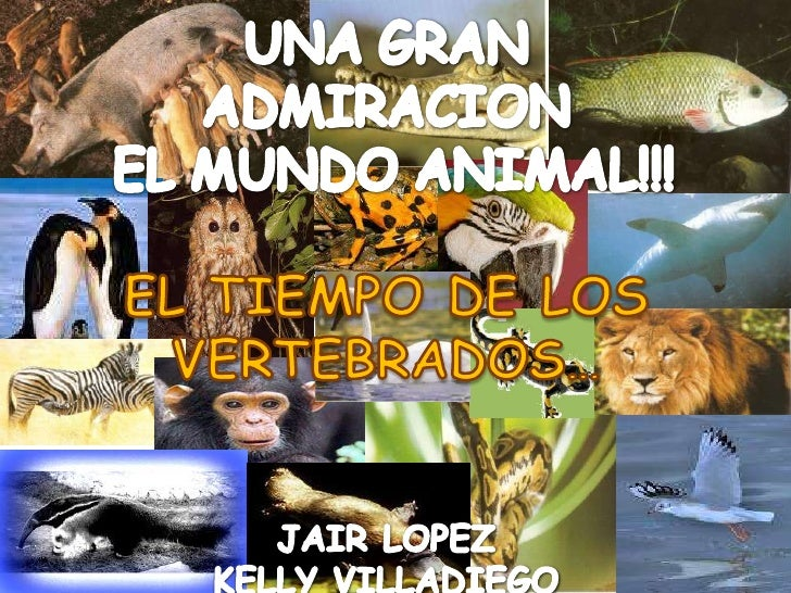 Una Gran Admiración Este Mundo Animal!! Tiempo De Los Vertebrados.