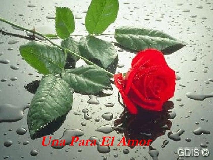 Una Rosa Para Tí