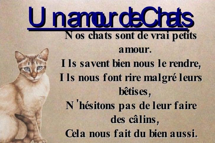 Un amour  de  Chats Nos chats  sont  de  vrai   petits  amour. Ils savent   bien  nous  le   rendre , Ils nous font rire  ...