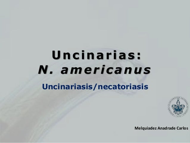Uncinarias: N. americanus Uncinariasis/necatoriasis Melquiadez Anadrade Carlos