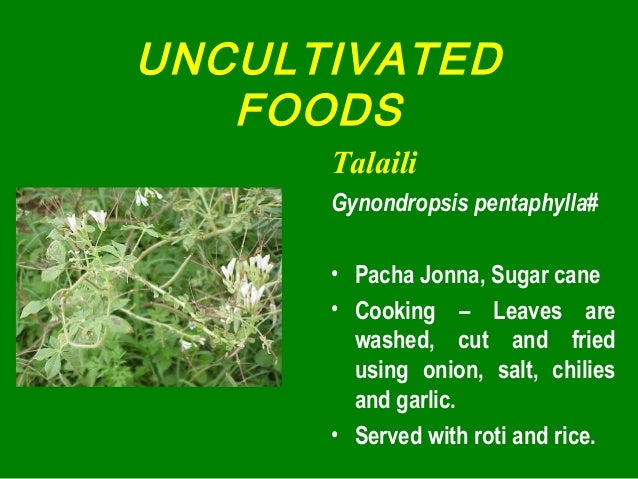 UNCULTIVATED FOODS Talaili Gynondropsis pentaphylla# • Pacha Jonna, Sugar cane • Cooking – Leaves are washed, cut and frie...