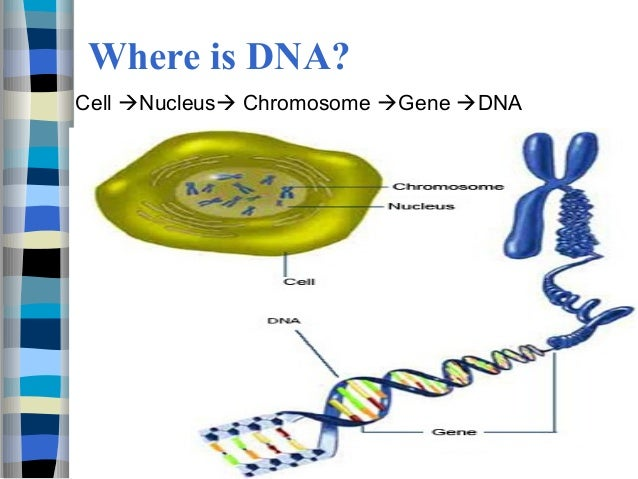 what is the relationship between chromosomes and dna molecules