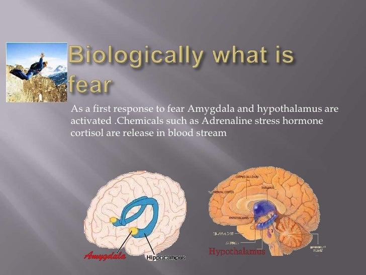 Understanding Fear Slide 3