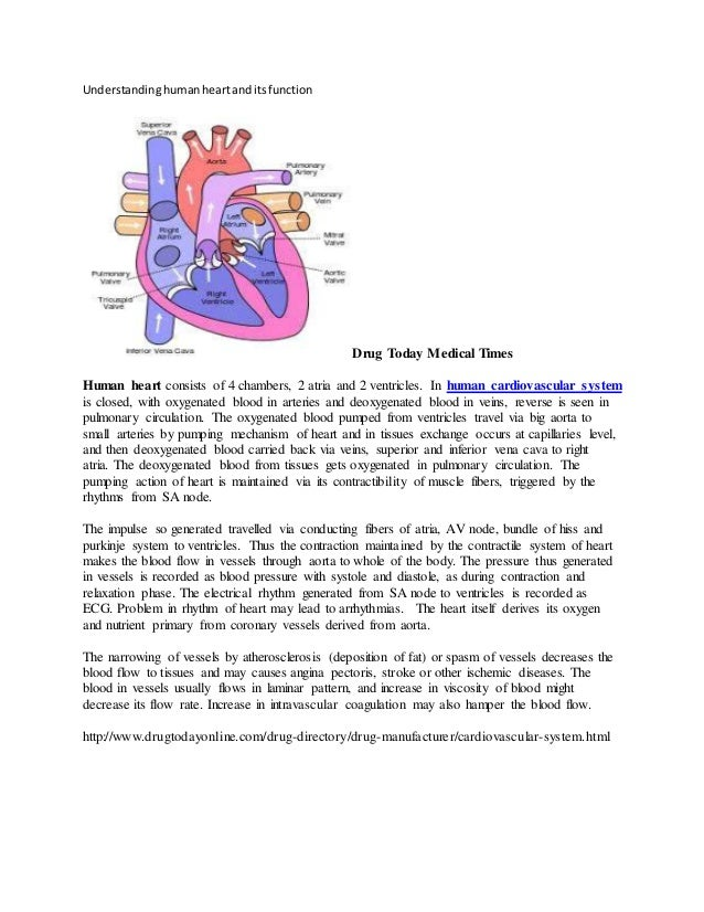 Understanding human heart and its function