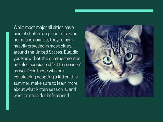Understanding Kitten Season And Adoption Slide 2