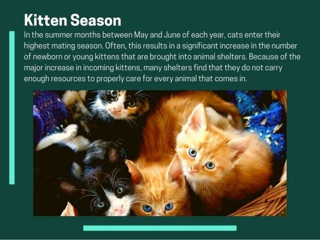 Understanding Kitten Season And Adoption Slide 3
