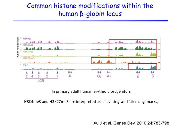 Development of in vitro model systemsto study reactivation or d      d        i i       derepression                      ...