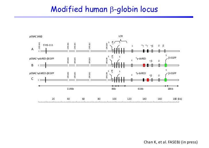 Measurement of DsRed/EGFP expression           following treatment           f ll i t      t   t                          ...