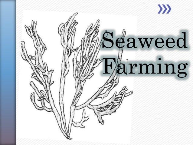 Seaweed Faming