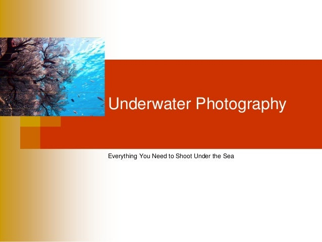Underwater PhotographyEverything You Need to Shoot Under the Sea