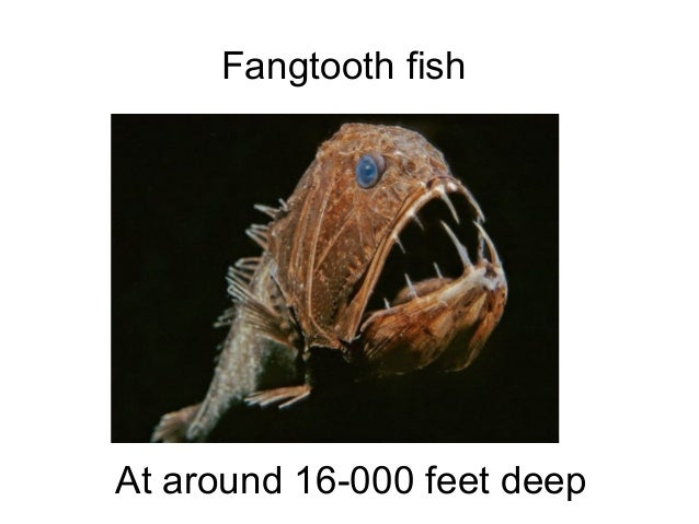 Underwater world undiscovered-creatures-discovered Slide 3