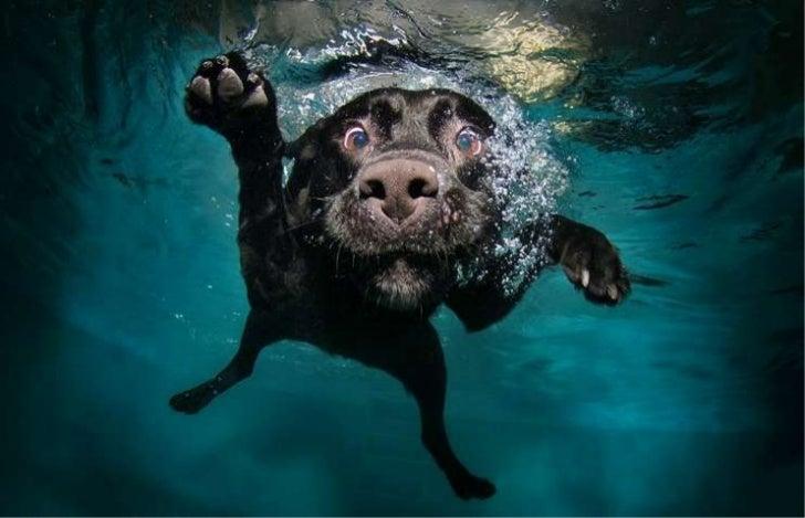 Underwater dogs por Seth Casteel
