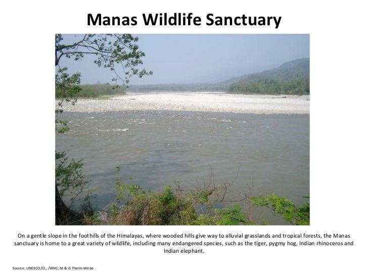 Manas wildlife sanctuary essays