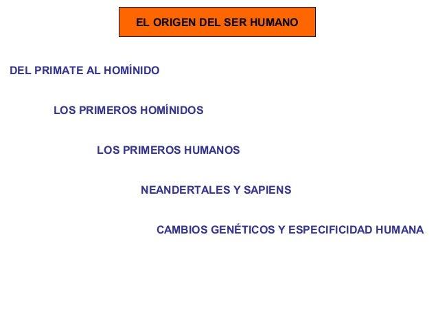 EL ORIGEN DEL SER HUMANO DEL PRIMATE AL HOMÍNIDO LOS PRIMEROS HOMÍNIDOS LOS PRIMEROS HUMANOS NEANDERTALES Y SAPIENS CAMBIO...