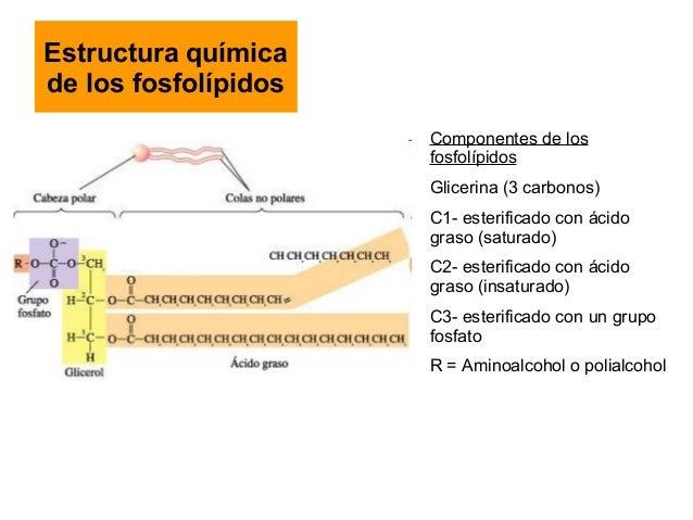 Espirulina para bajar de peso dosis de amoxicilina