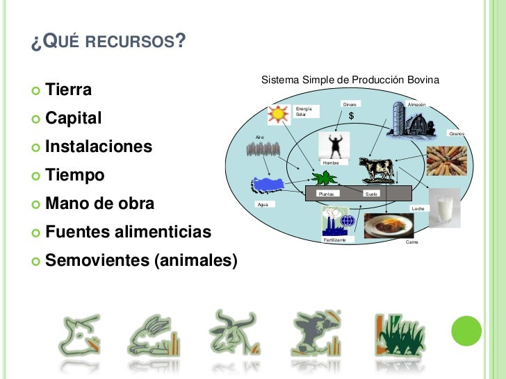 Clasificación de los sistemas de producción animal<br />Cuando se pretende hacer una clasificación se toman criterios al g...