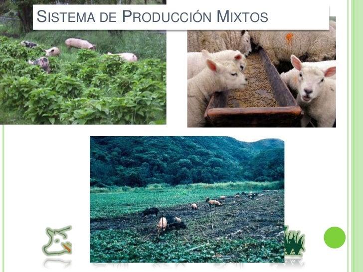 Alimentación basada principalmente en el pastoreo.