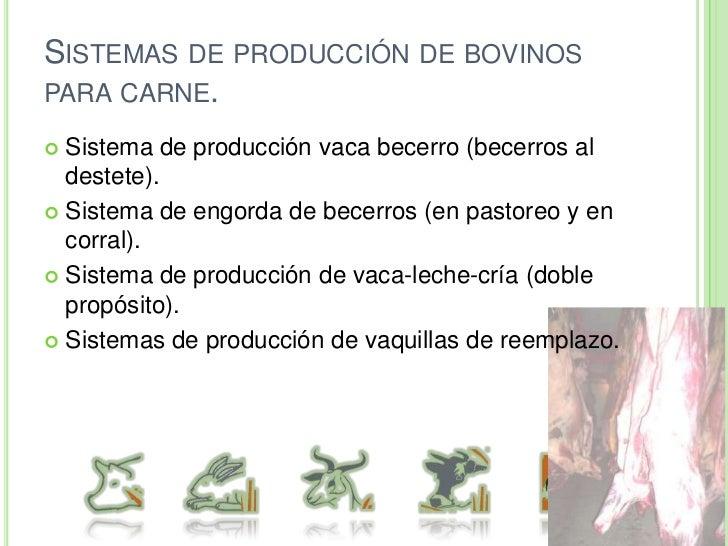 3) Origen de los alimentos (S. Marginales)<br />