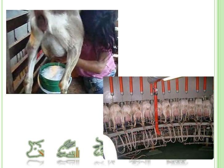 Sistemas de producción de cerdos<br />Sistemas de producción Familiar o de traspatio.<br />Sistemas de producción de pie d...
