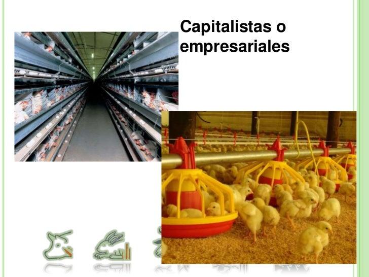 Sistemas de producción de caprinos<br />Producción de cabritos.<br />Producción leche carne.<br />Producción de pelo.<br /...