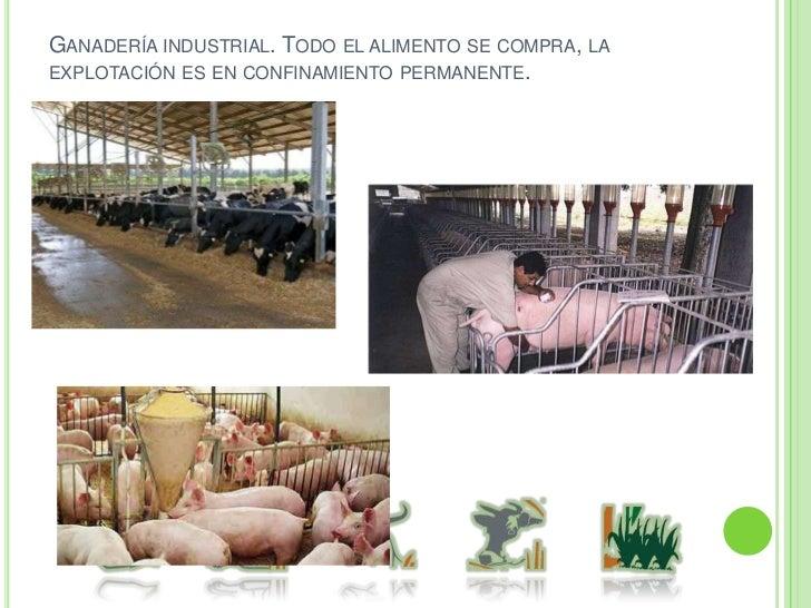 Sistemas de producción de aves<br />Producción de carne.<br />Producción de huevo.<br />Producción de gallinas ponedoras d...