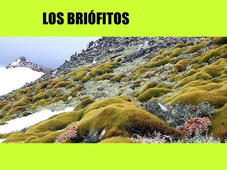 LOS BRIÓFITOS