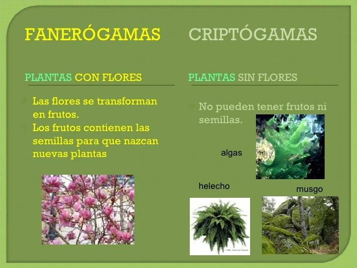 Unidad 9 las plantas for Que son plantas ornamentales ejemplos