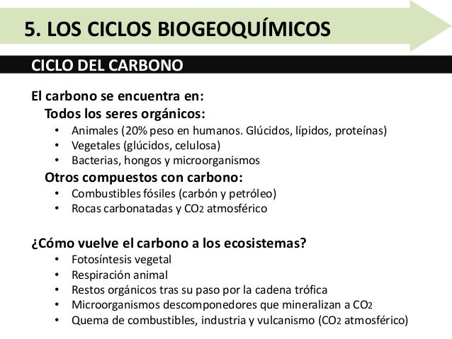 Unidad 10.5   los ciclos biogeoquímicos Slide 3
