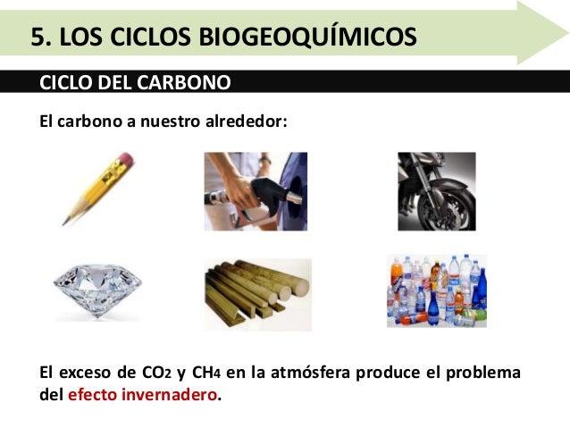 Unidad 10.5   los ciclos biogeoquímicos Slide 5