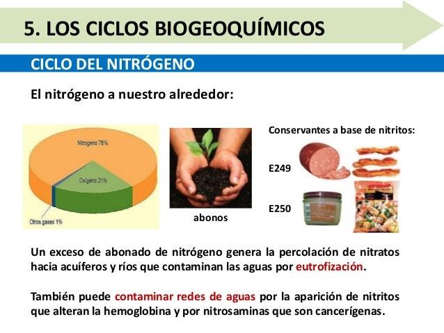 Unidad 10.5   los ciclos biogeoquímicos Slide 8