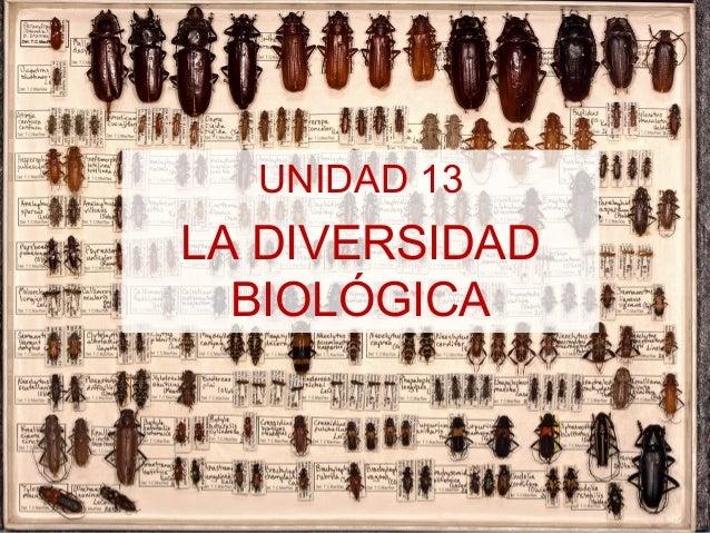 UNIDAD 13  LA DIVERSIDAD BIOLÓGICA