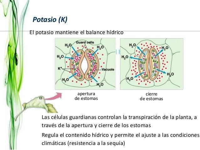 Unidad 1a for Potasio para plantas