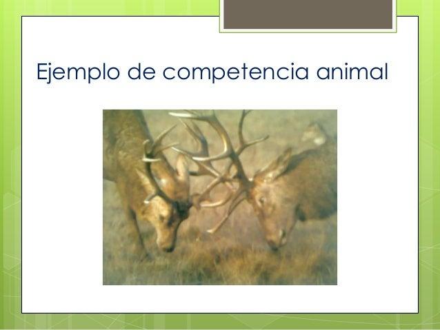Ejemplo de competencia animal