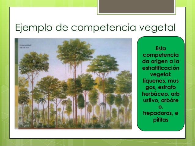 Ejemplo de competencia vegetalEstacompetenciada origen a laestratificaciónvegetal:líquenes, musgos, estratoherbáceo, arbus...