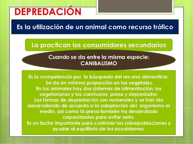 DEPREDACIÓNEs la utilización de un animal como recurso tróficoLa practican los consumidores secundariosCuando se da entre ...