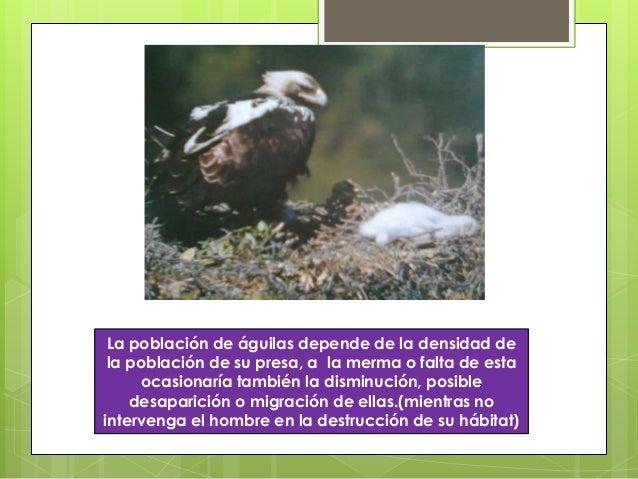 La población de águilas depende de la densidad dela población de su presa, a la merma o falta de estaocasionaría también l...