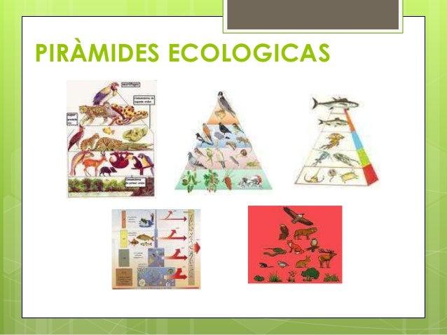 PIRÀMIDES ECOLOGICAS