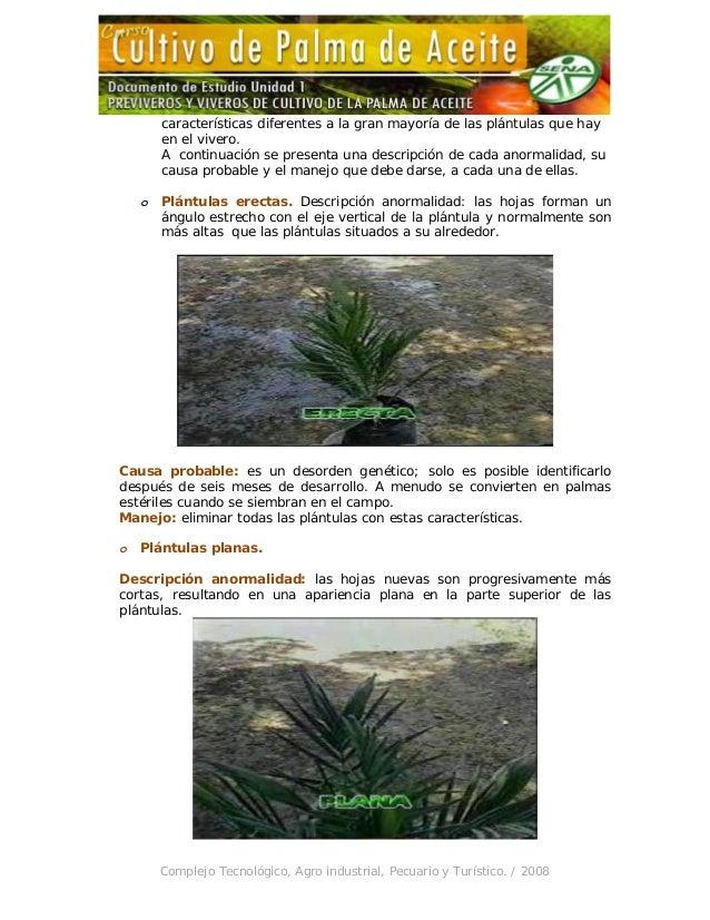 Unidad 1 previveros y viveros de cultivo de la palma de aceite for Caracteristicas del vivero