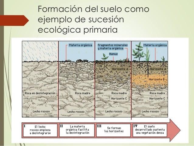 Sucesi n ecol gica y formaci n del suelo for Proceso de formacion del suelo