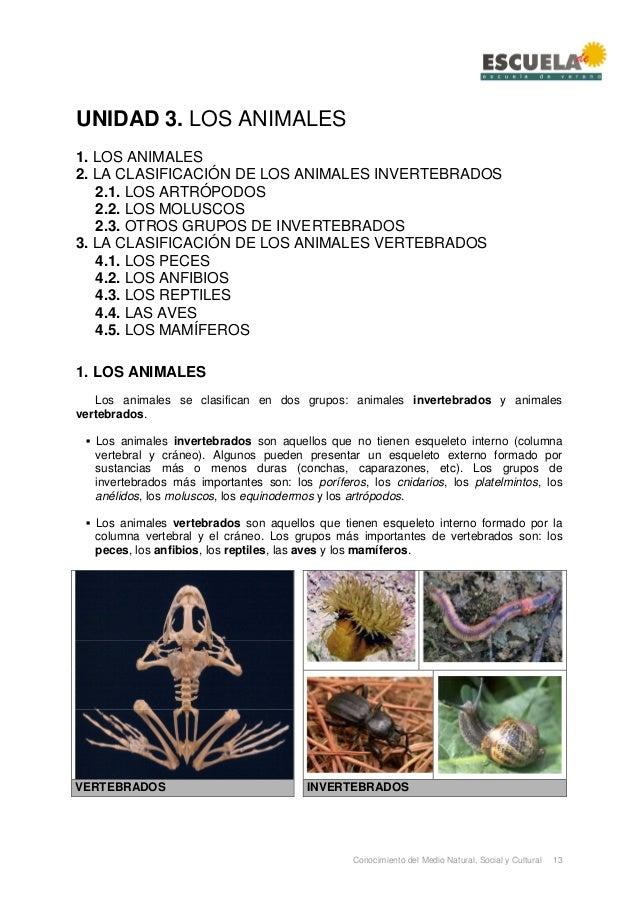 Conocimiento del Medio Natural, Social y Cultural 13 UNIDAD 3. LOS ANIMALES 1. LOS ANIMALES 2. LA CLASIFICACIÓN DE LOS ANI...