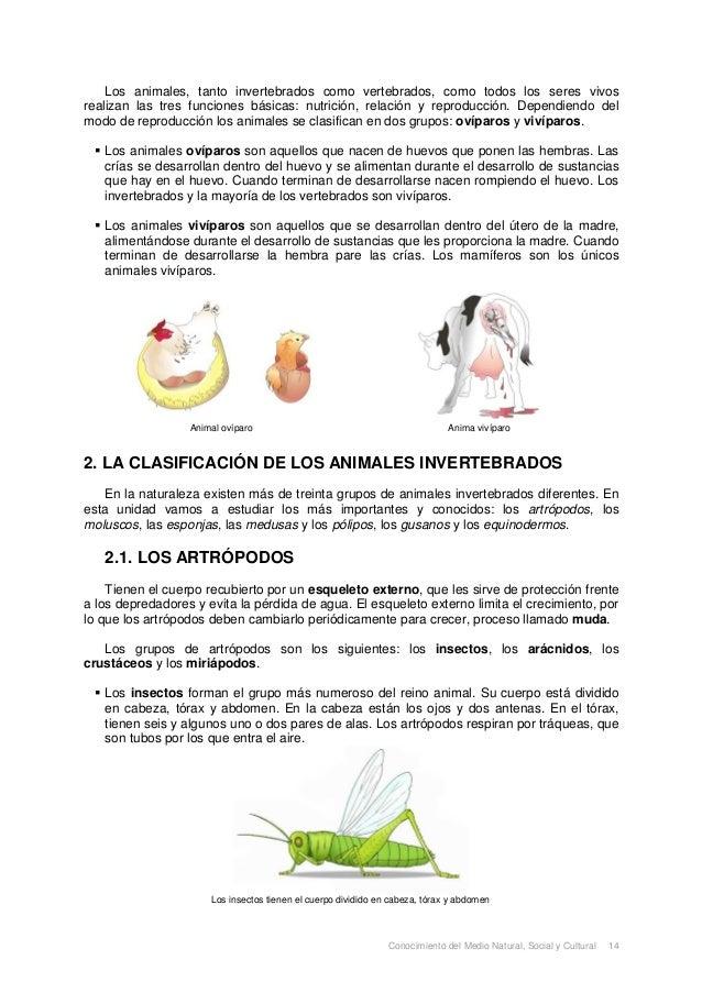 Los Animales Slide 2