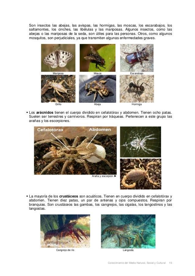 Los Animales Slide 3
