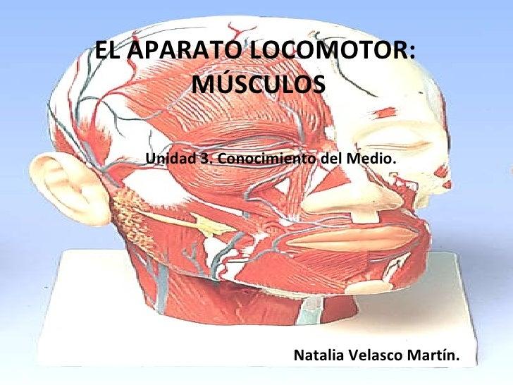 EL APARATO LOCOMOTOR:  MÚSCULOS Unidad 3. Conocimiento del Medio. Natalia Velasco Martín.