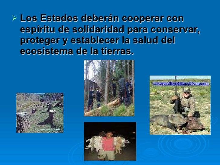 <ul><li>Los Estados deberán cooperar con espíritu de solidaridad para conservar, proteger y establecer la salud del ecosis...