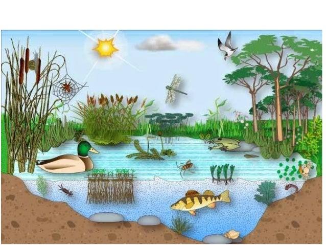 Animales Marino para Colorear: Pequeños | Imagenes de Animales ...
