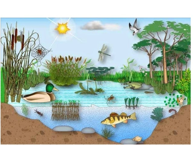 Unidad 4 ecosistemas