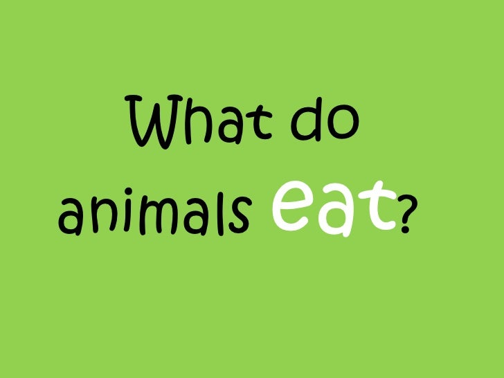What do  animals  eat ?